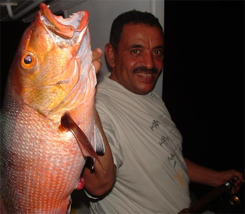Photo of Bohar Snapper fish, Souther Egyptian Red Sea
