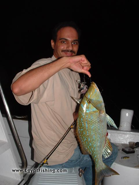 Fishing in Egypt's Night fishing for Emperor (Lethrinus Nebulosus) in Hurghada
