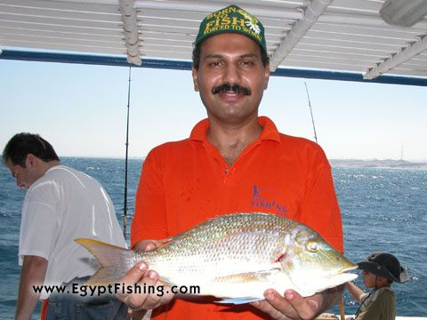Picture of Fishing in Egypt for Emperor Fish (Lethrinus Nebulosus) Bottom fishing in Egypt