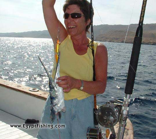 Pche (L'Egypte): Giant Needle Fish Severely Attacked by a Giant Barracuda,Shallow Boat Trolling, 18cm Orange Floating Lure (shown),Hurghada