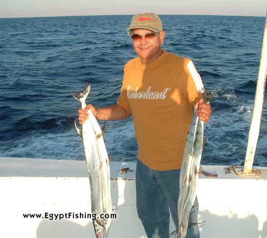 Red Sea Needle Fish,Surface Still Fishing with Natural Cut Bait,Gulf of Suez