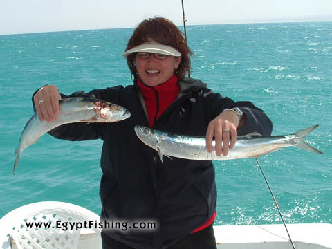 سمك السيوف أو سمك السيف: Red Sea Fishing, Wolf Herring fish (L. Chirocentrus Nudus)