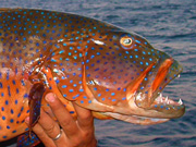 Link to Grouper Fish Photo Page 1